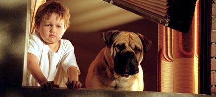 Spot: Um cão da pesada no Feriadão SBT